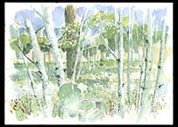Aspens in the Backyard, watercolor on paper, 9in by 13in, 2008