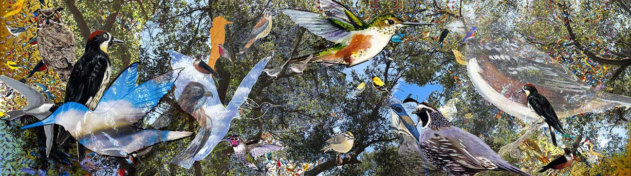 Santa Monica Mountain Birds, digital photo collage, 99x27.75